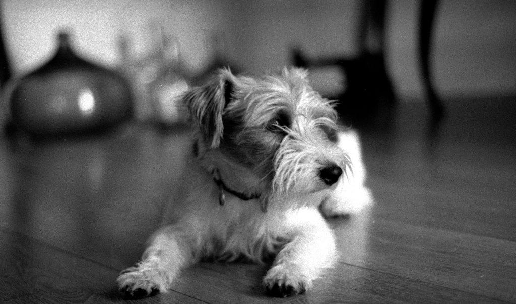 Dog Click Brescia Ritratti a 4 zampe