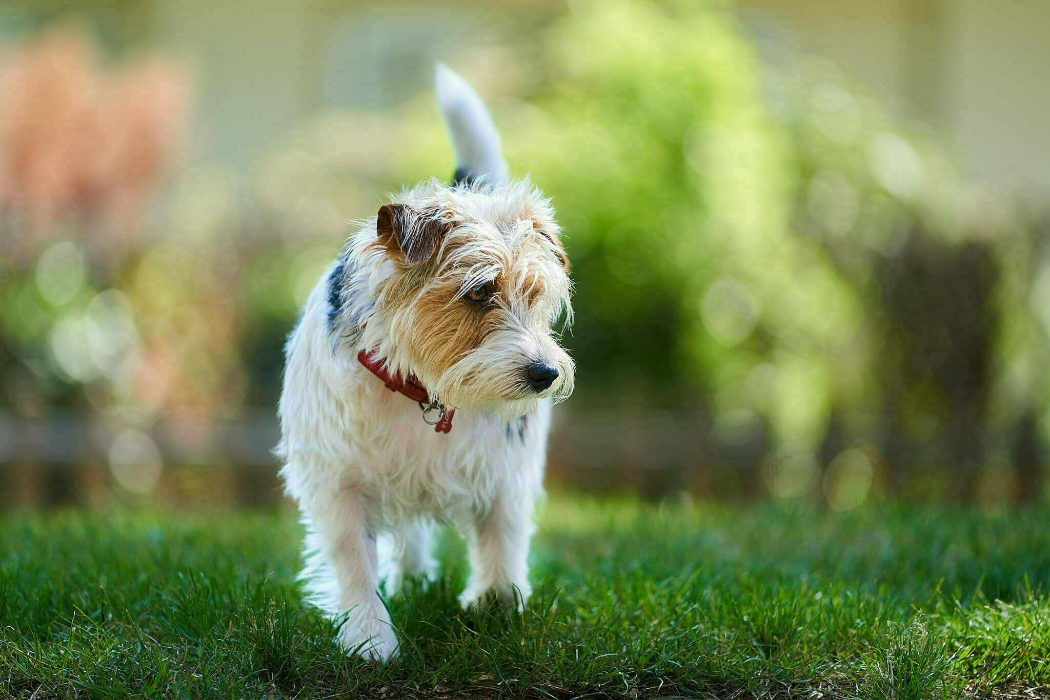 regalo perfetto per chi ama i cani