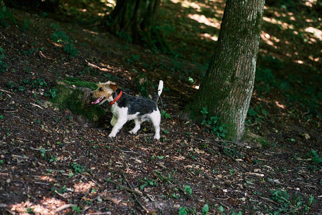 Passeggiare nella natura con il nostro cane
