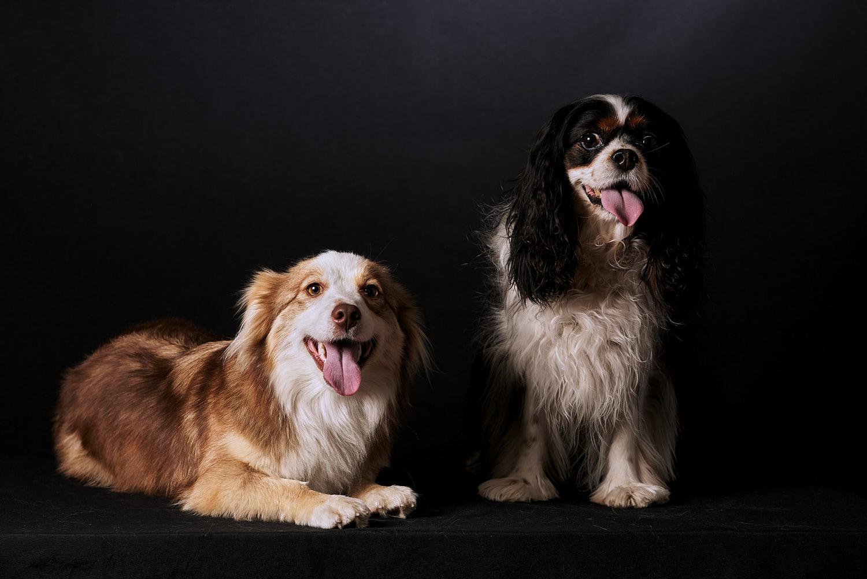 Ritratti ai cani Giorgio Baruffi fotografo Brescia