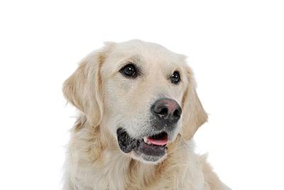 I cani sono i nostri migliori amici