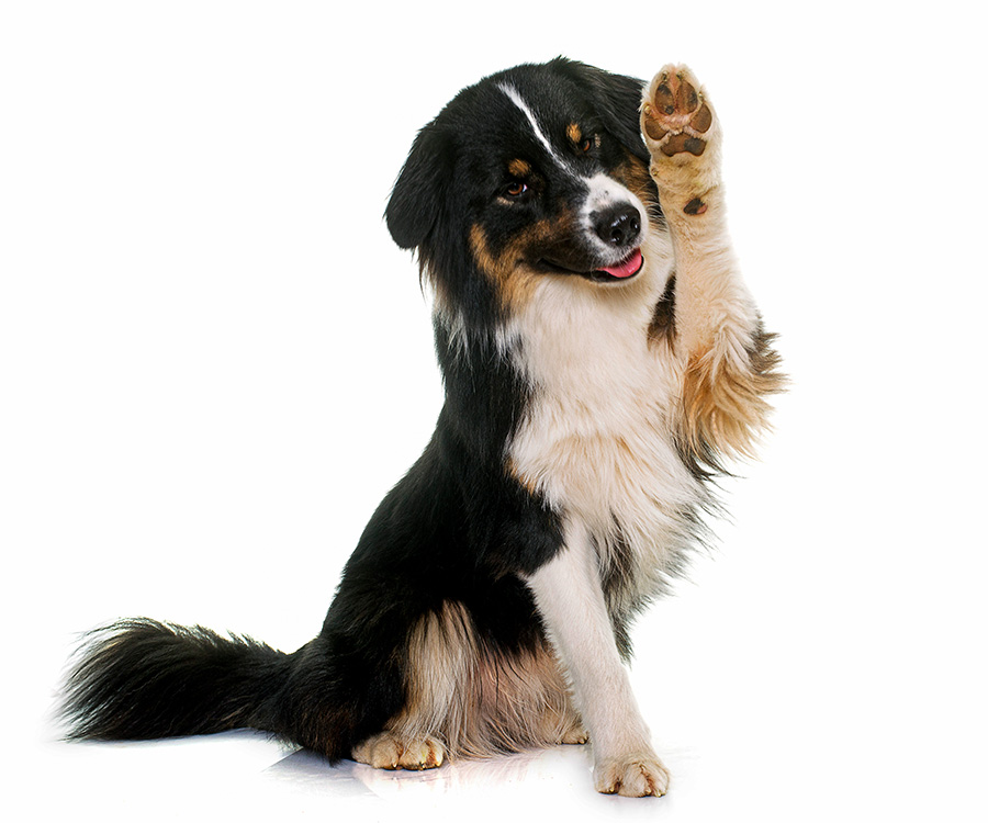 DogClick Ritratti ai Cani Appuntamento