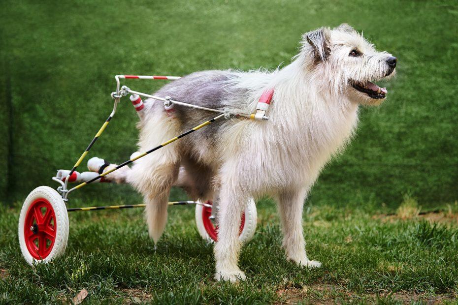 fotografo di cani gli Angeli Sgangherati