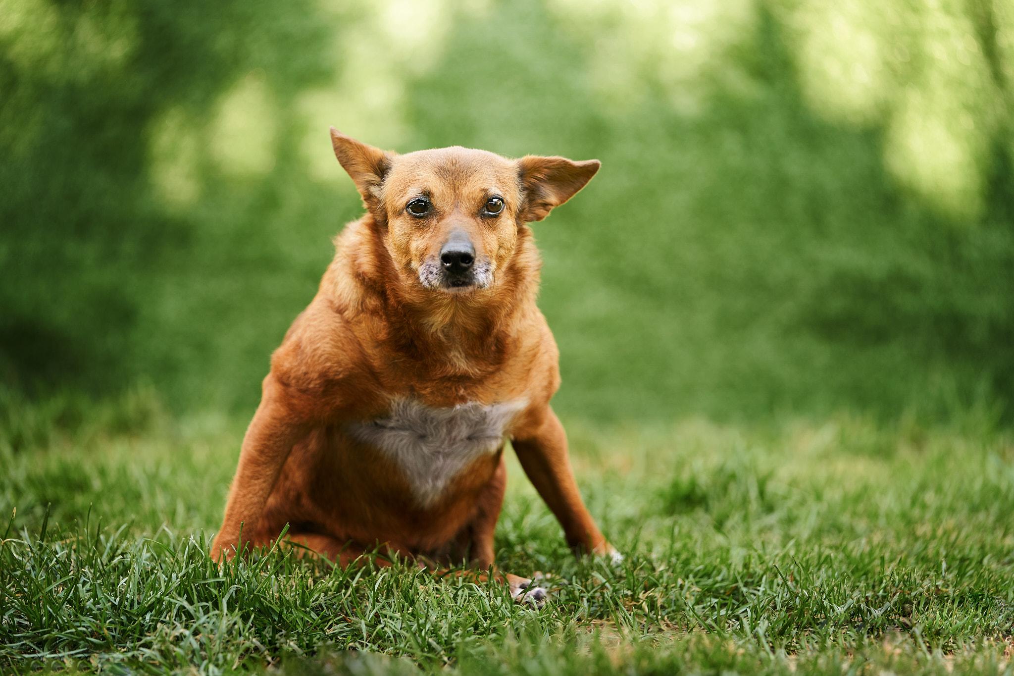 cani disabili, giorgio baruffi fotografo di cani a brescia