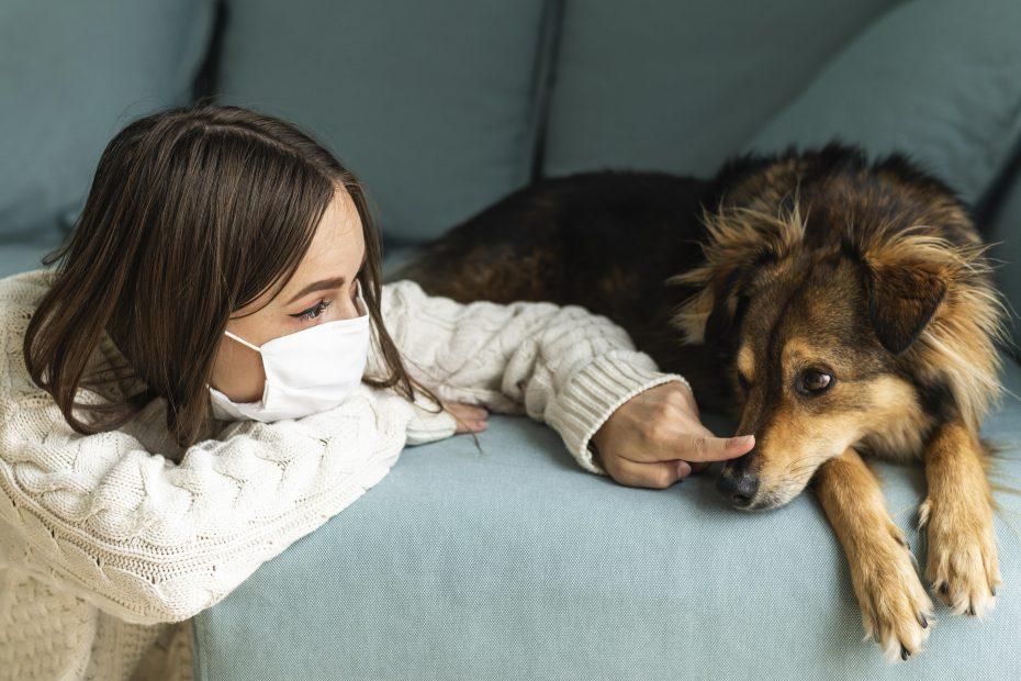 Il Coronavirus i cani e le loro necessità durante la pandemia
