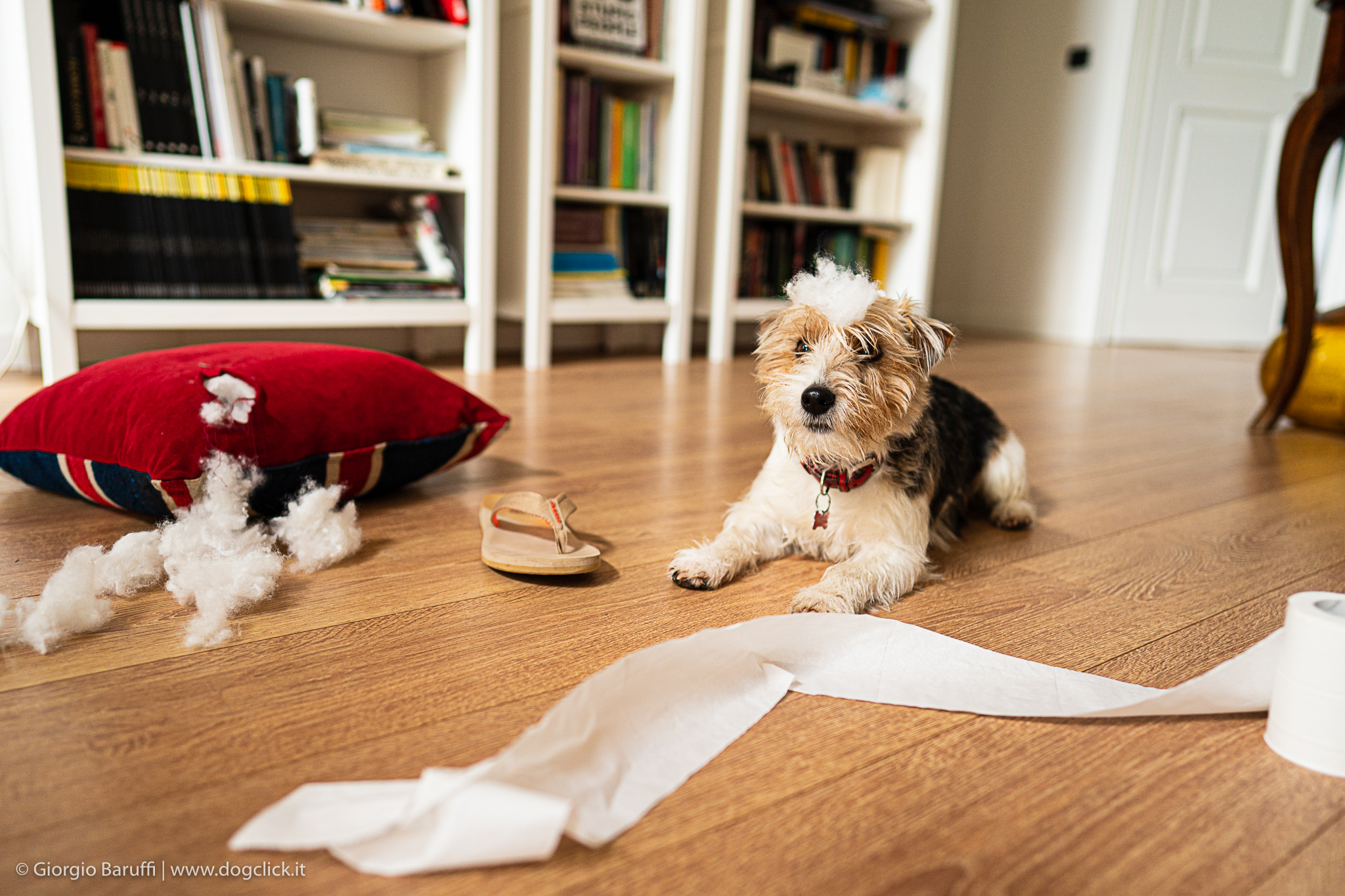 Come insegnare al cane che non deve mordere degli oggetti