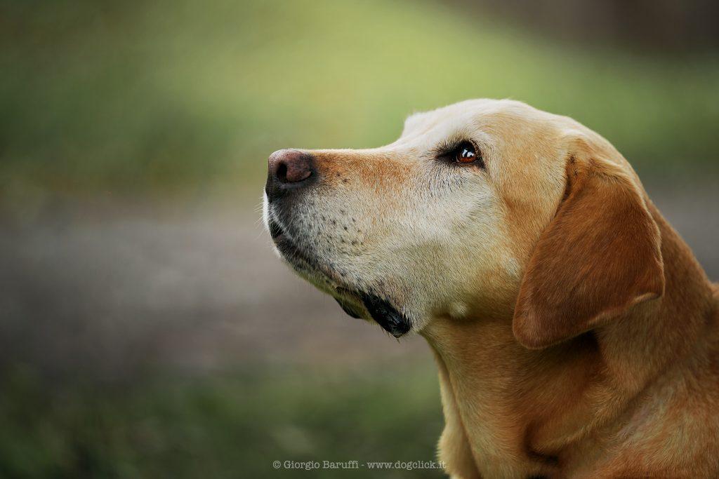 L'amore di un cane è per sempre